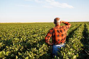 Senior farmer looking at crops